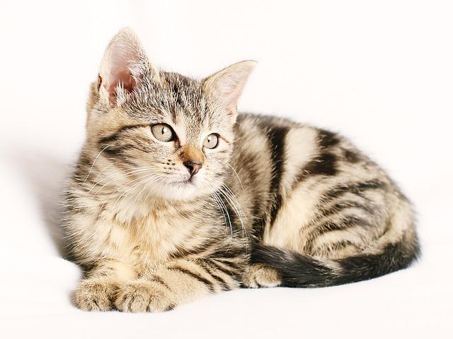 choroby przenoszone przez koty