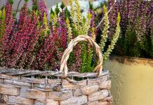 Jak zbudować wrzosowisko w ogrodzie?