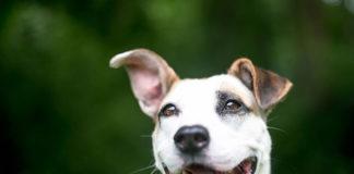 Jak wybrać obrożę dla psa?