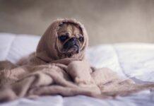 Pościel satynowa bawełniana - dla komfortu snu